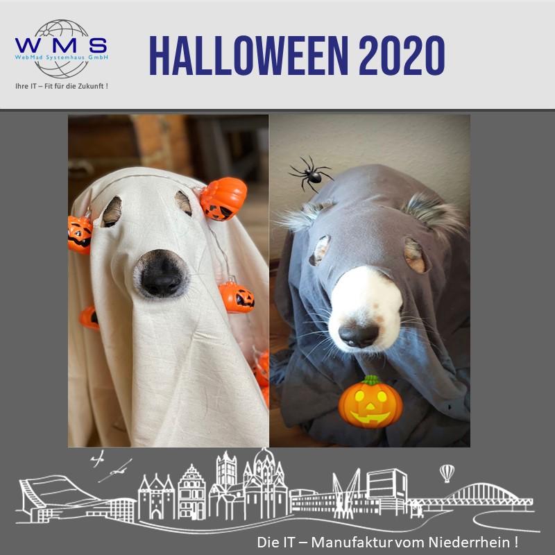 Tierische Geister Happy Halloween 2020